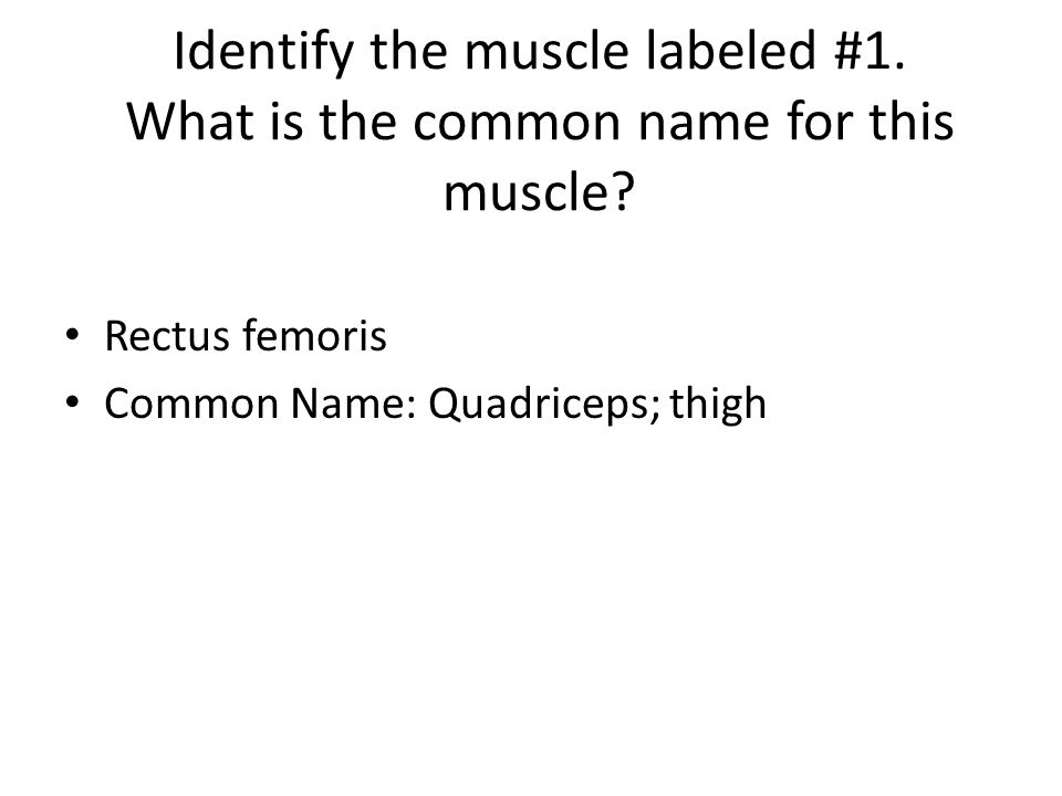Identify the muscle labeled #1. What is the common name for this muscle