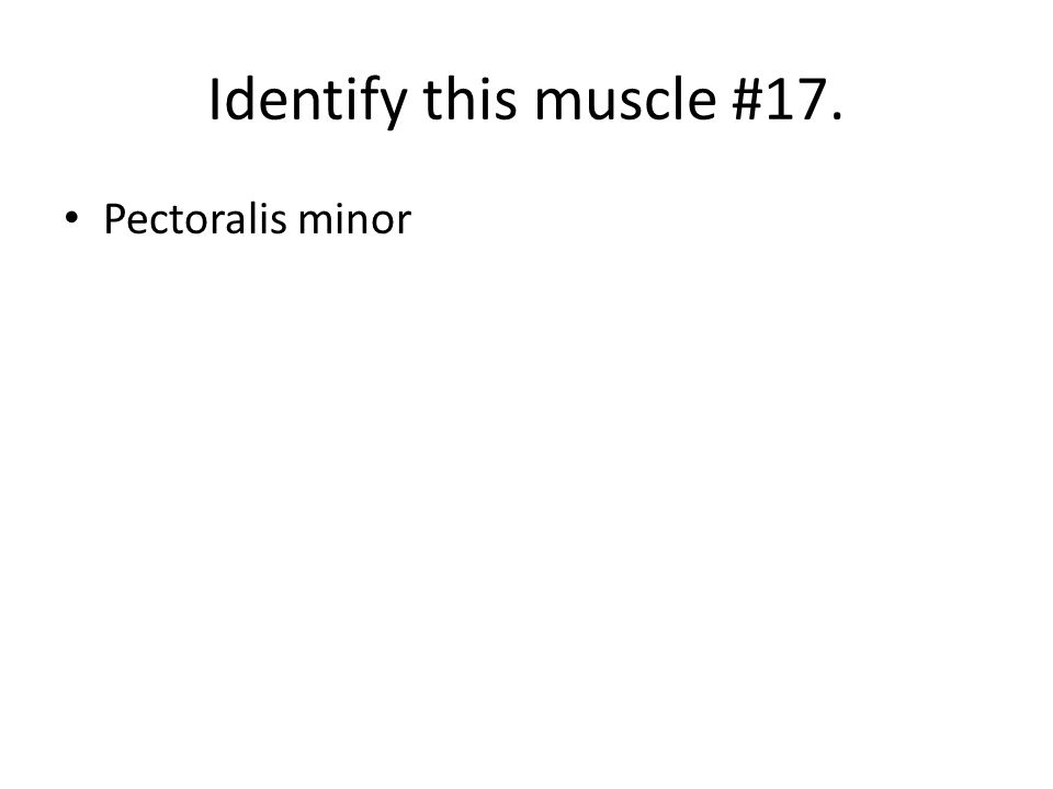 Identify this muscle #17. Pectoralis minor