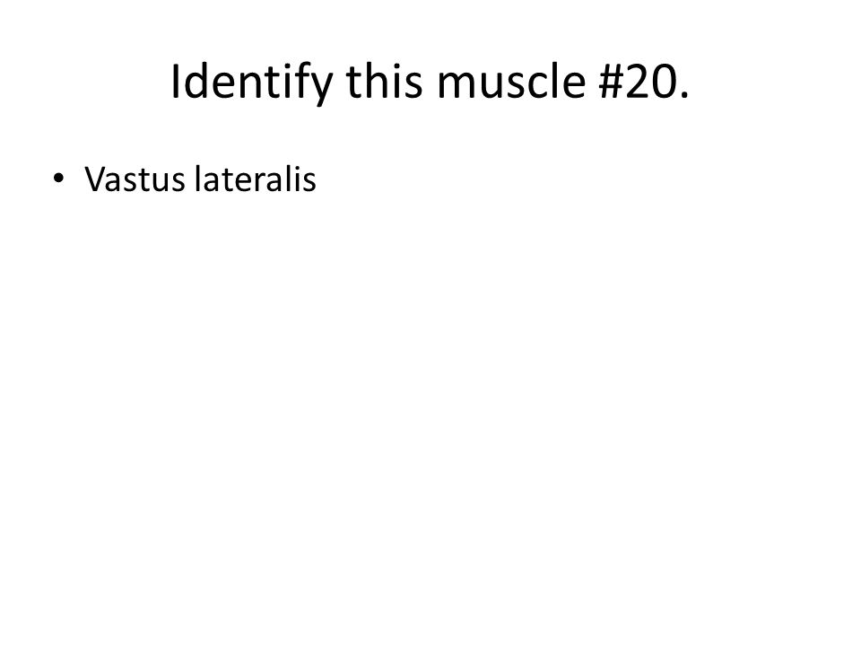 Identify this muscle #20. Vastus lateralis