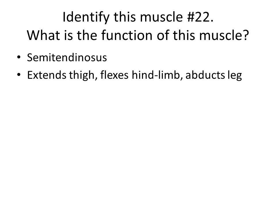 Identify this muscle #22. What is the function of this muscle