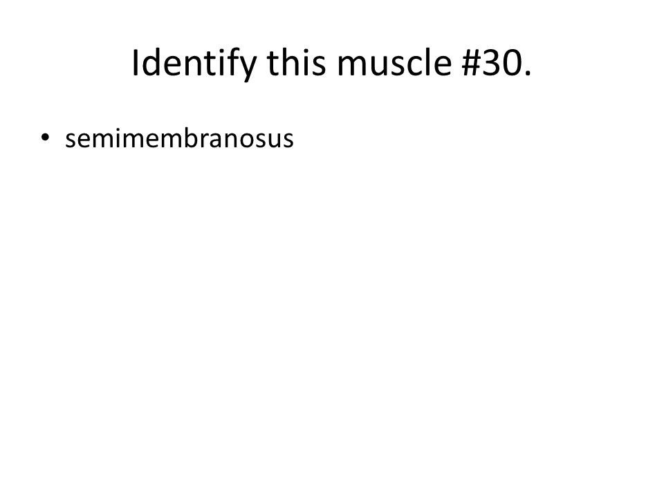 Identify this muscle #30. semimembranosus