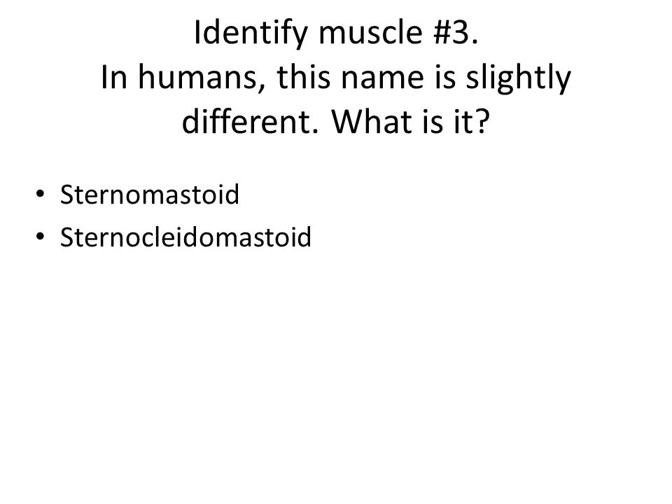 Identify muscle #3. In humans, this name is slightly different