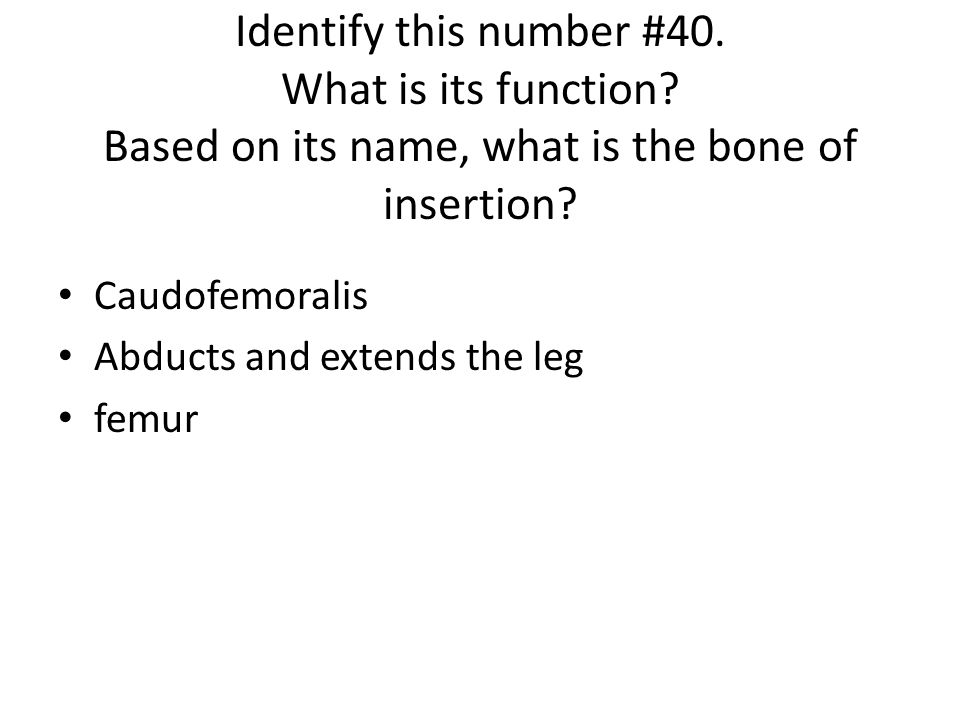 Identify this number #40. What is its function