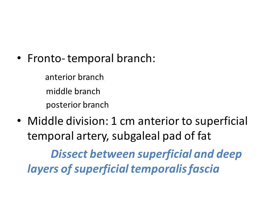Fronto- temporal branch: anterior branch