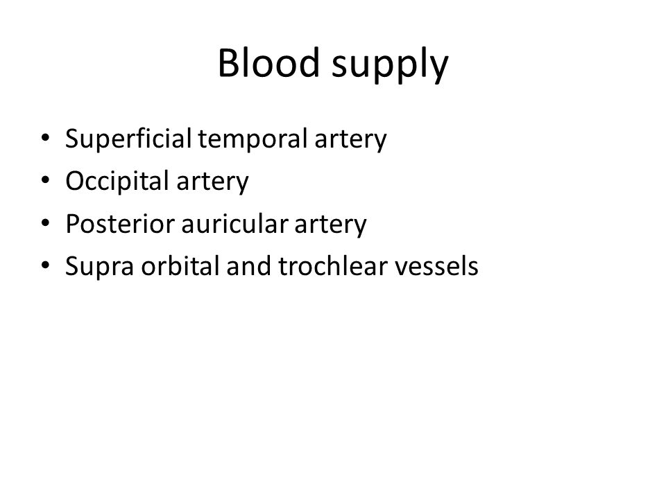 Blood supply Superficial temporal artery Occipital artery