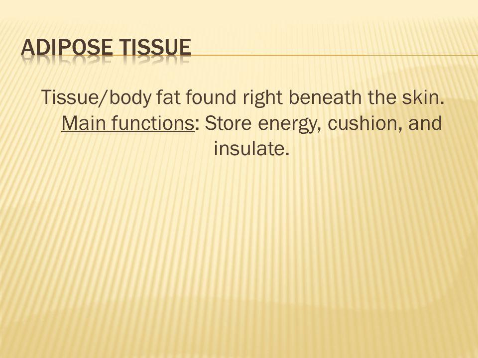 Adipose Tissue Tissue/body fat found right beneath the skin.