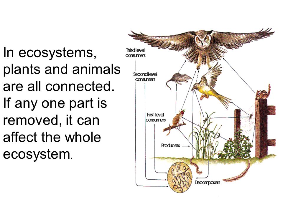 In ecosystems, plants and animals are all connected