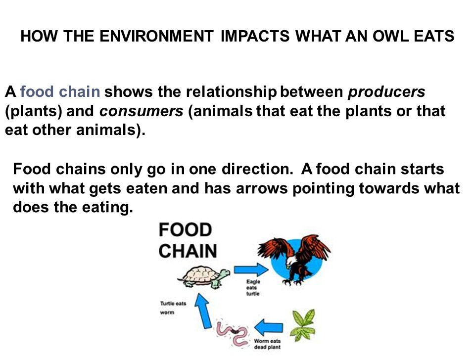 HOW THE ENVIRONMENT IMPACTS WHAT AN OWL EATS