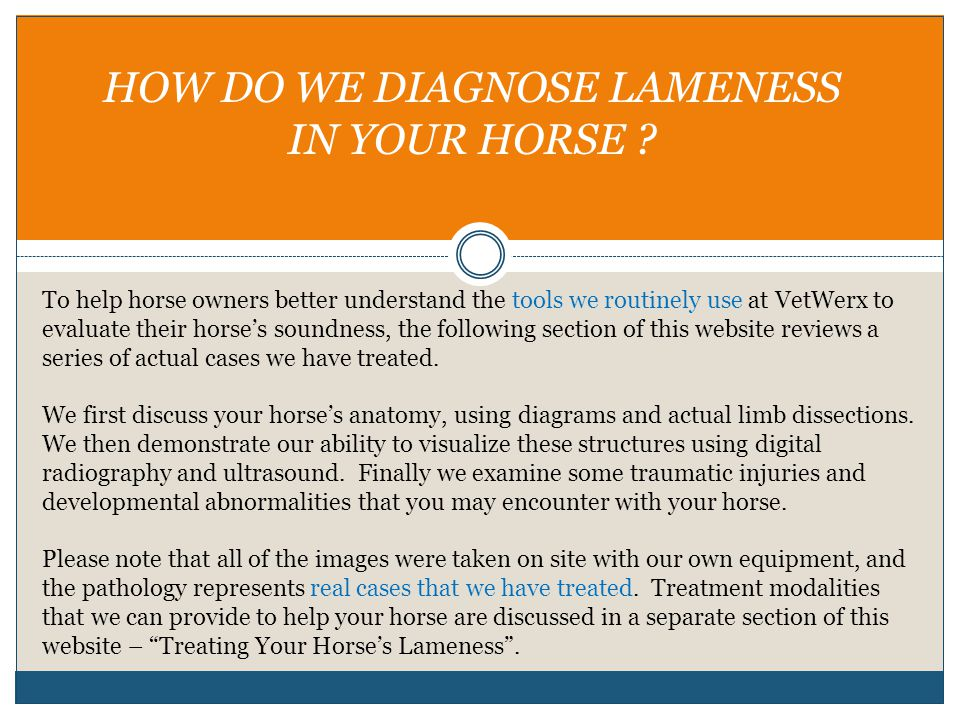 HOW DO WE DIAGNOSE LAMENESS IN YOUR HORSE