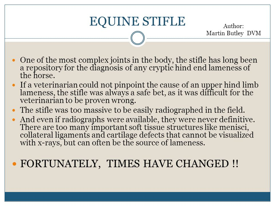EQUINE STIFLE FORTUNATELY, TIMES HAVE CHANGED !!