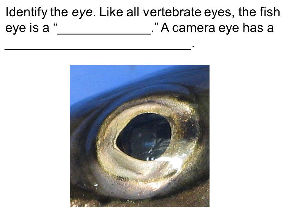 Identify the eye.