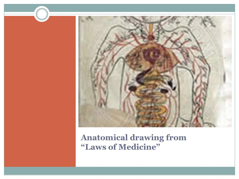 Anatomical drawing from Laws of Medicine