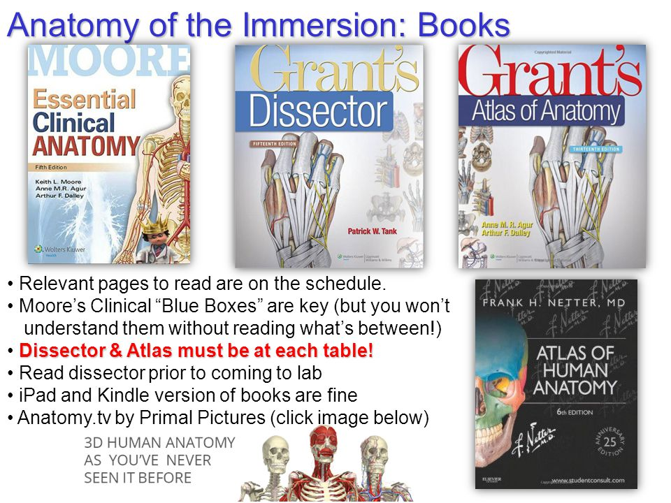 Anatomy of the Immersion: Books