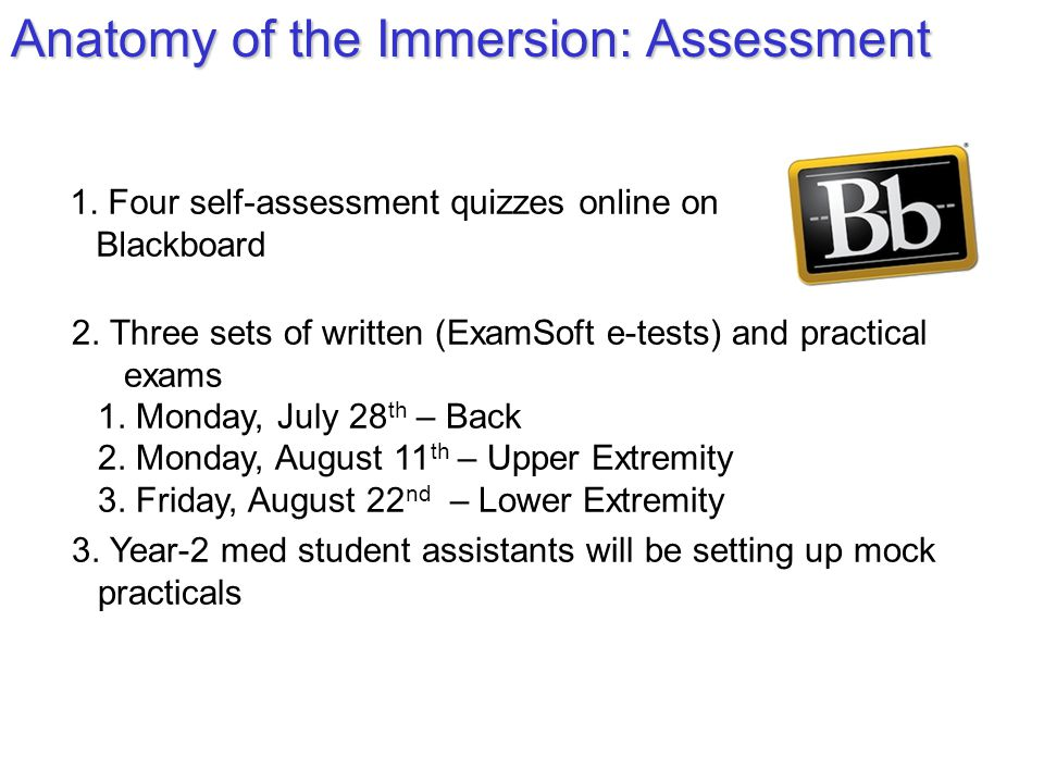 Anatomy of the Immersion: Assessment