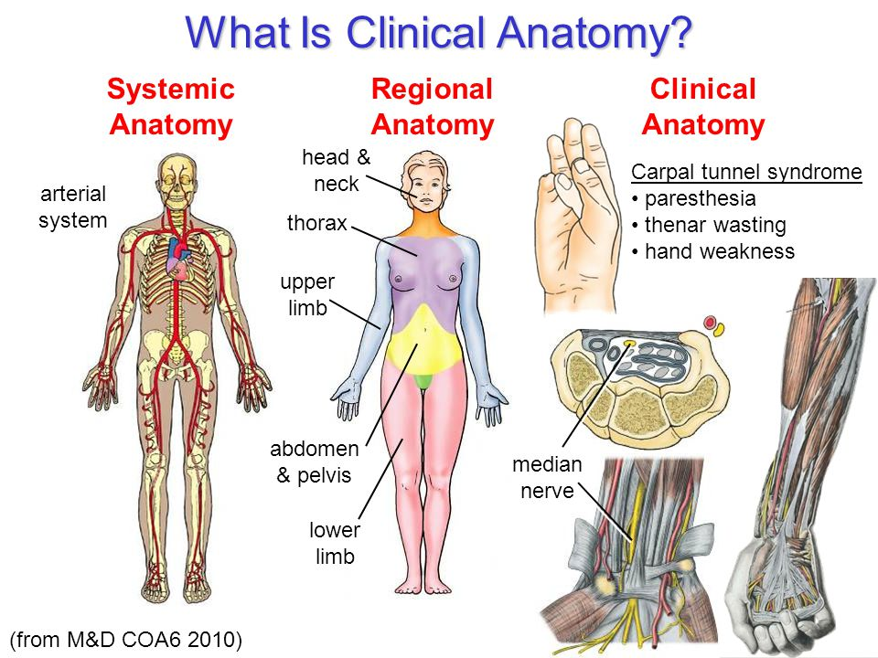 What Is Clinical Anatomy