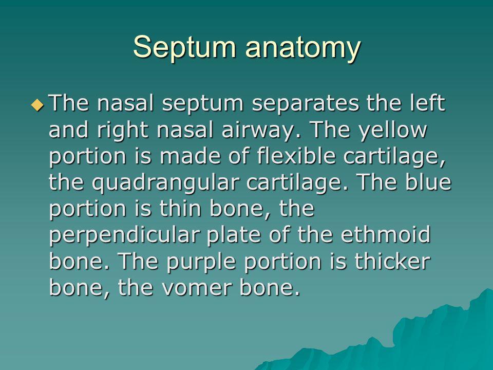 Septum anatomy