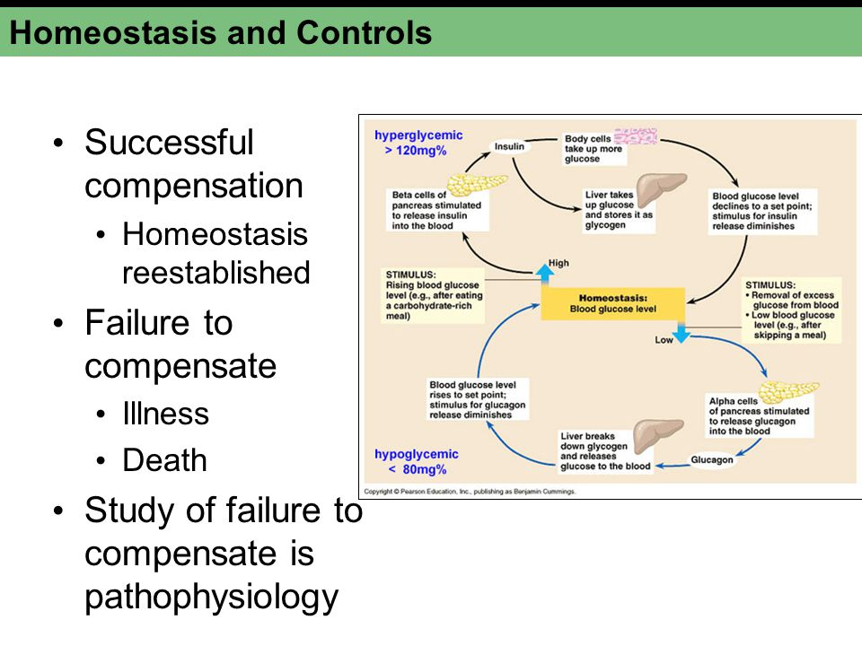 Homeostasis and Controls