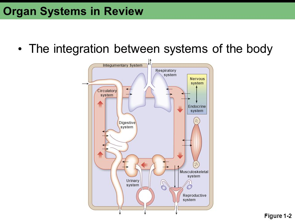 Organ Systems in Review