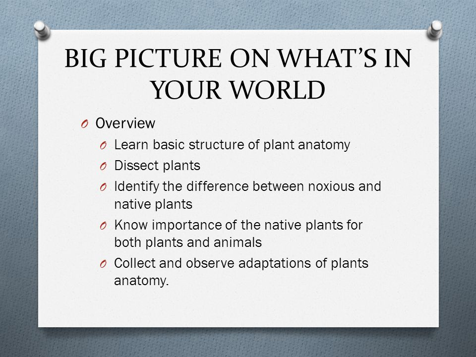 BIG PICTURE ON WHAT'S IN YOUR WORLD