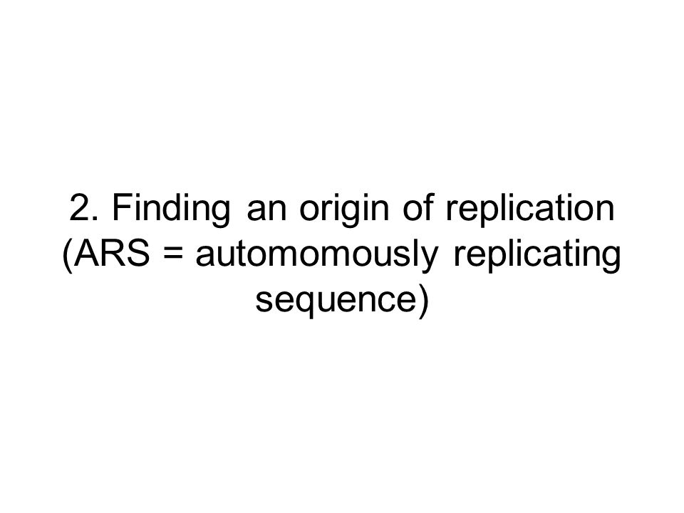 2. Finding an origin of replication (ARS = automomously replicating sequence)