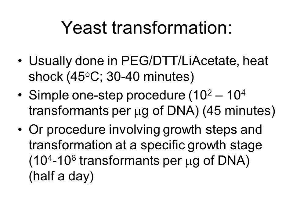Yeast transformation:
