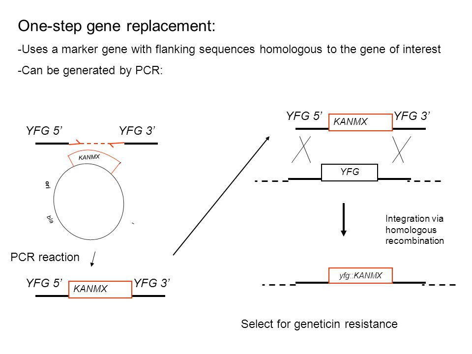 One-step gene replacement: