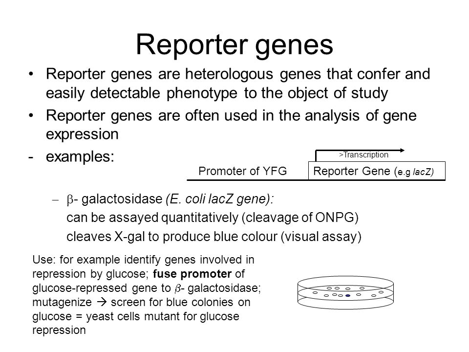 Reporter genes Reporter genes are heterologous genes that confer and easily detectable phenotype to the object of study.
