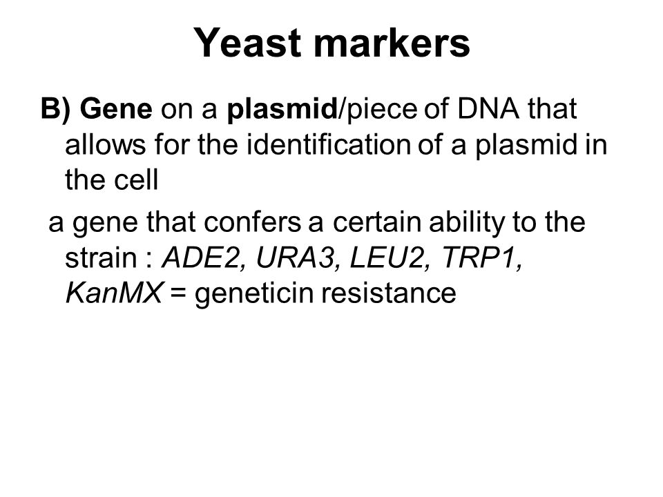 Yeast markers B) Gene on a plasmid/piece of DNA that allows for the identification of a plasmid in the cell.