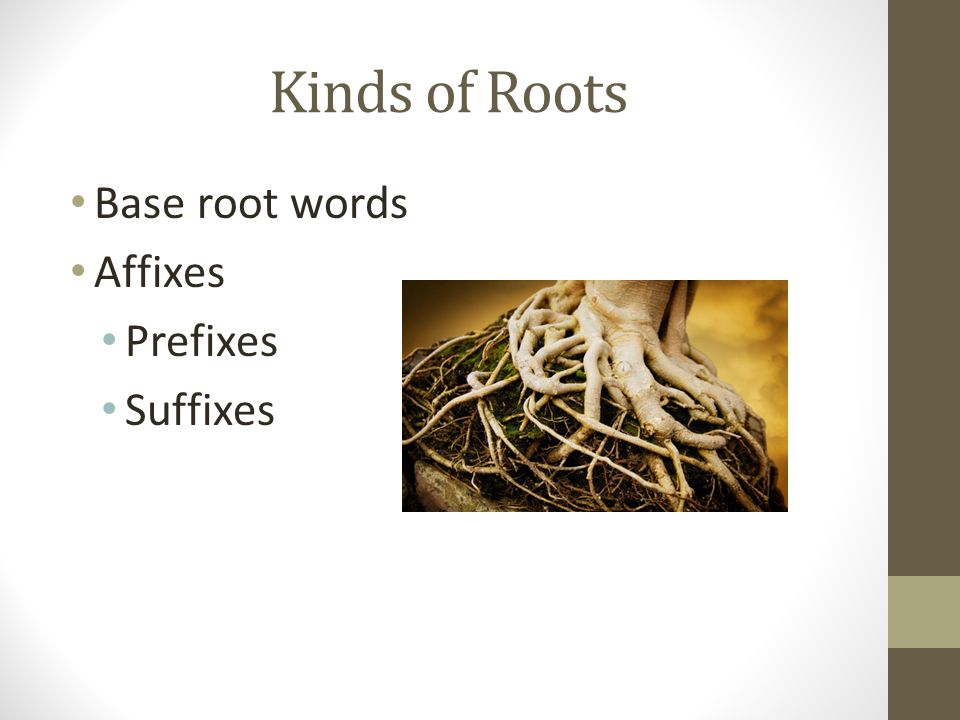 Kinds of Roots Base root words Affixes Prefixes Suffixes