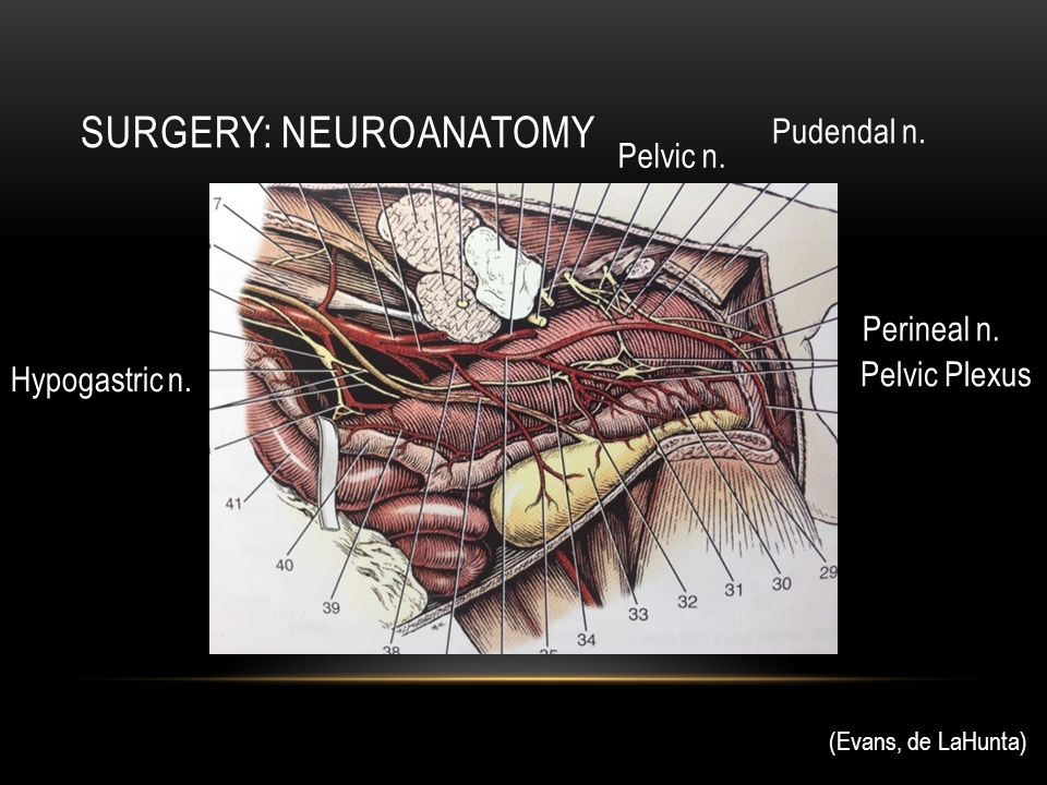 Surgery: Neuroanatomy