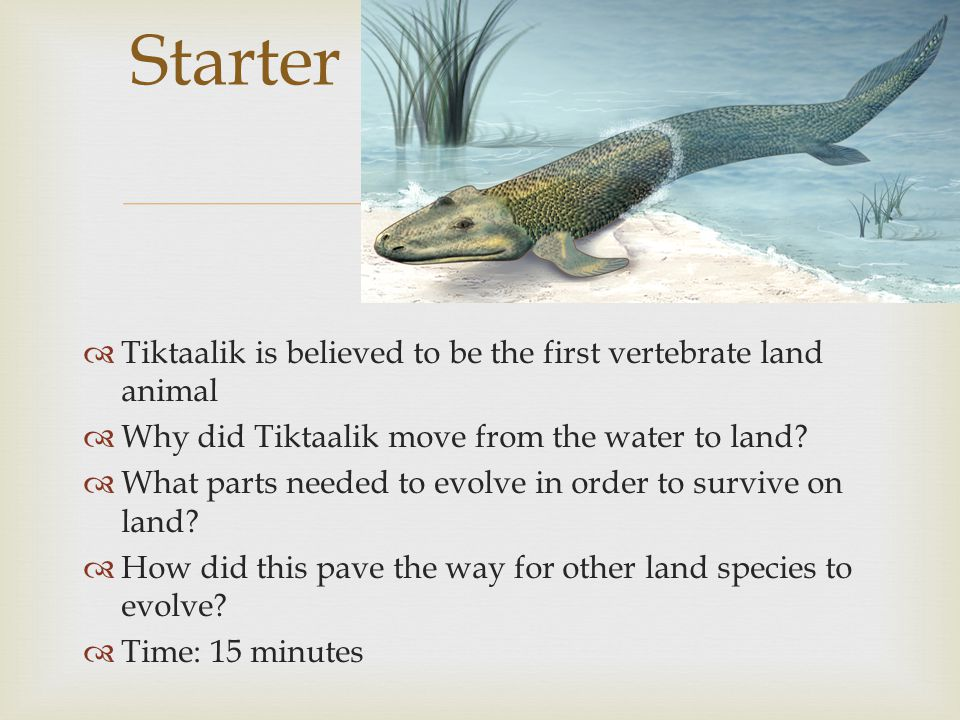 Starter Tiktaalik is believed to be the first vertebrate land animal