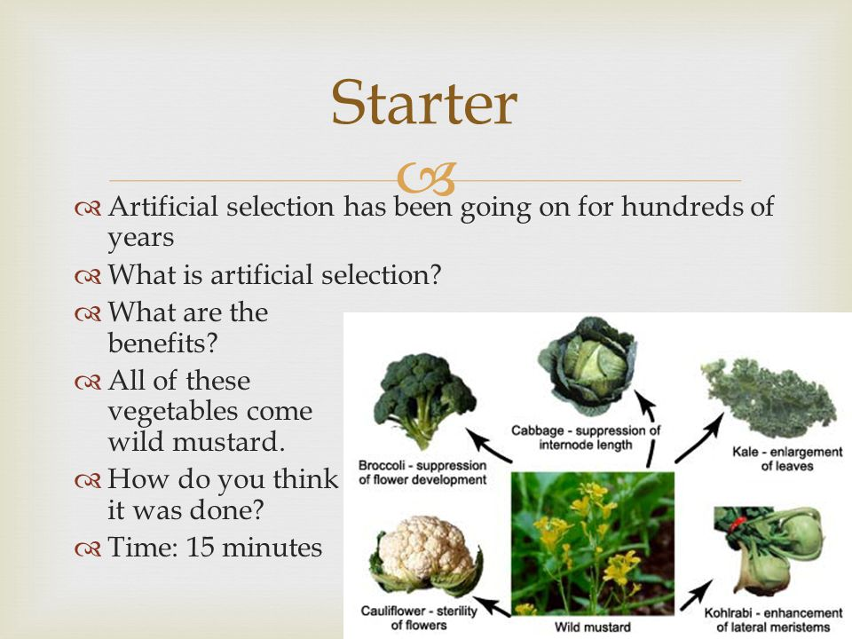 Starter Artificial selection has been going on for hundreds of years