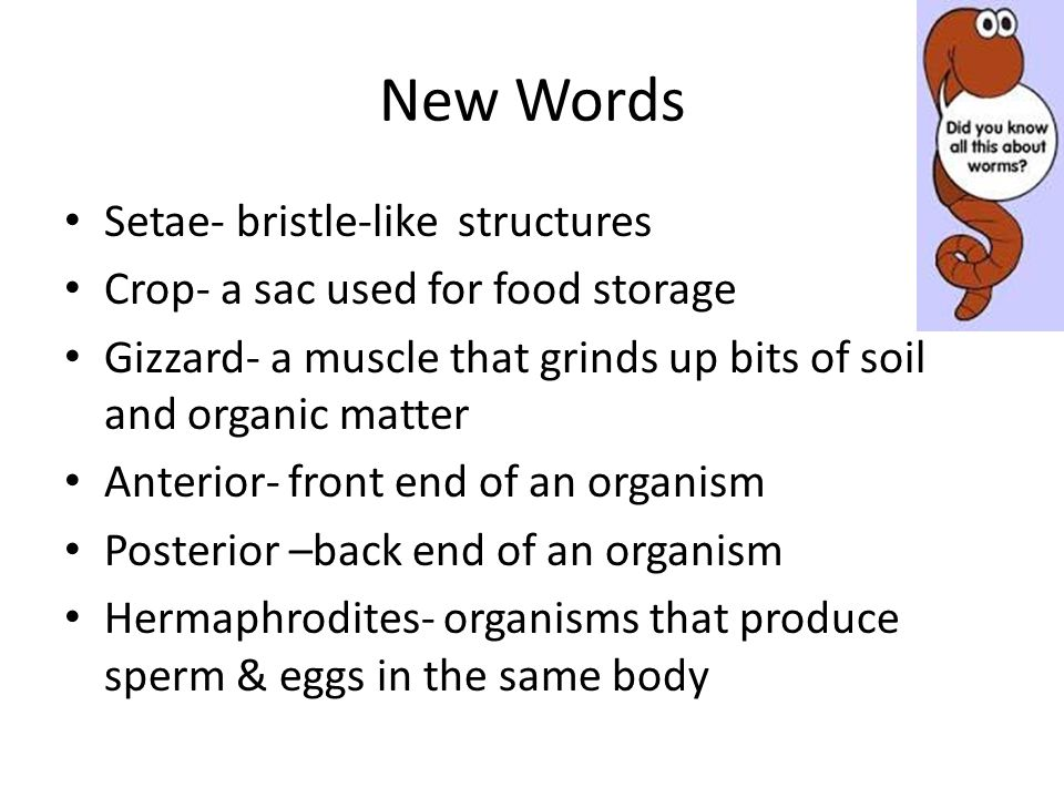 New Words Setae- bristle-like structures