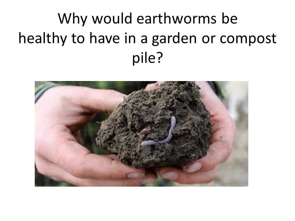 Why would earthworms be healthy to have in a garden or compost pile