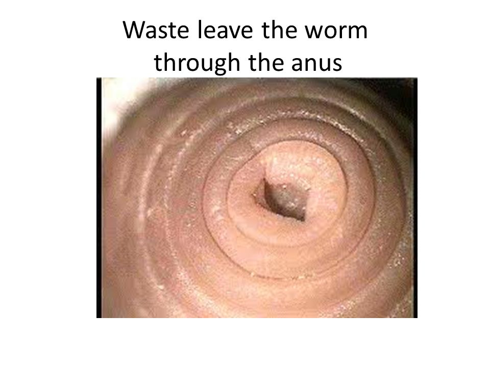 Waste leave the worm through the anus