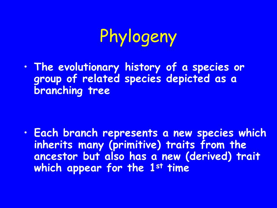 Phylogeny The evolutionary history of a species or group of related species depicted as a branching tree.
