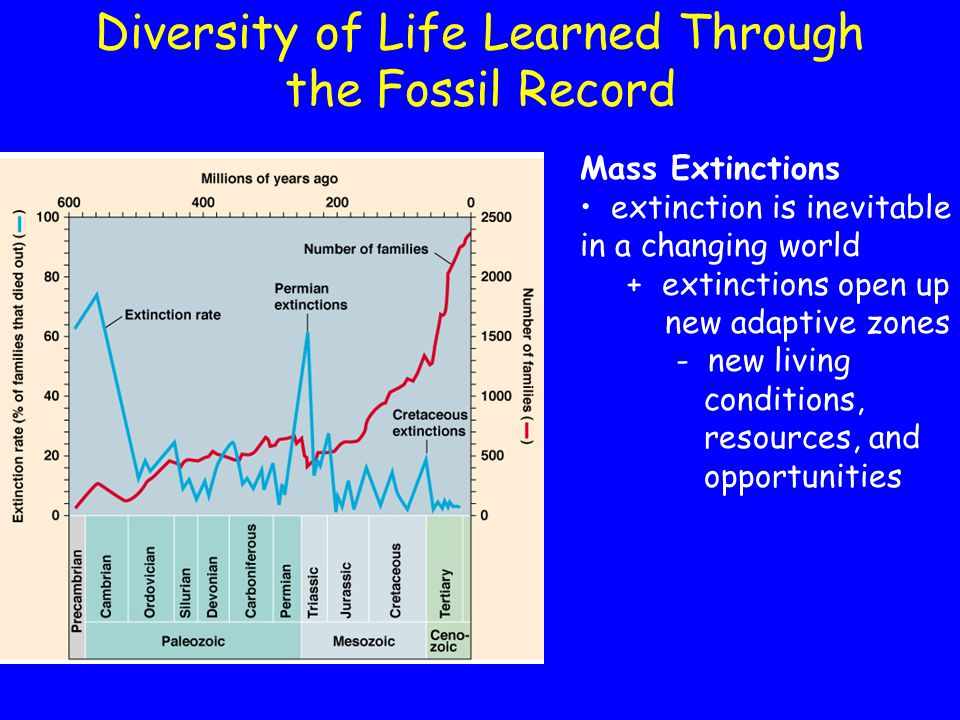 Diversity of Life Learned Through the Fossil Record