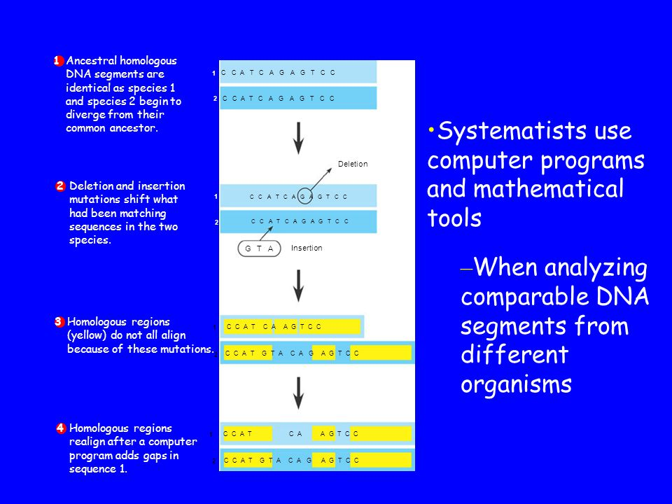 Systematists use computer programs and mathematical tools