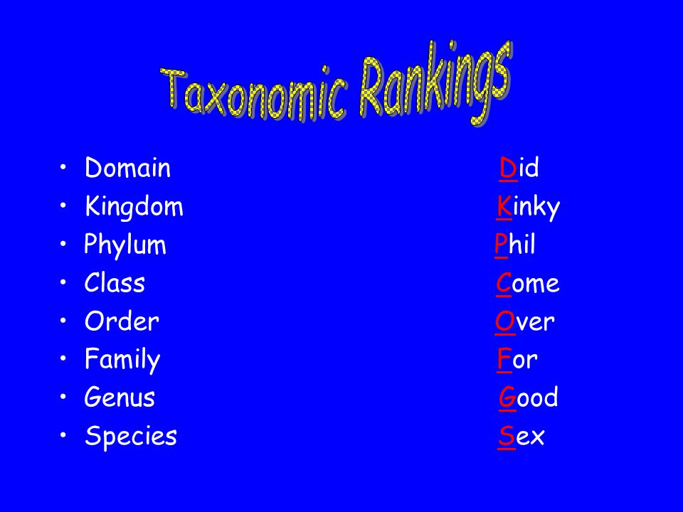 Taxonomic Rankings Domain Did Kingdom Kinky Phylum Phil Class Come