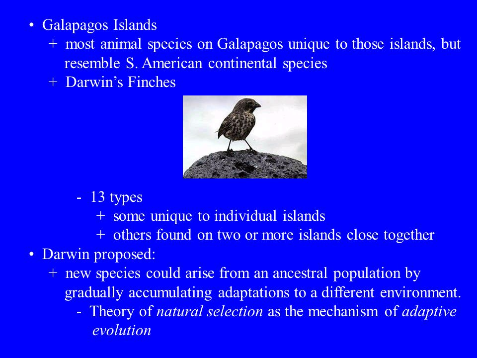 Galapagos Islands + most animal species on Galapagos unique to those islands, but. resemble S. American continental species.