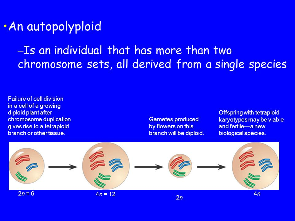 An autopolyploid Is an individual that has more than two chromosome sets, all derived from a single species.