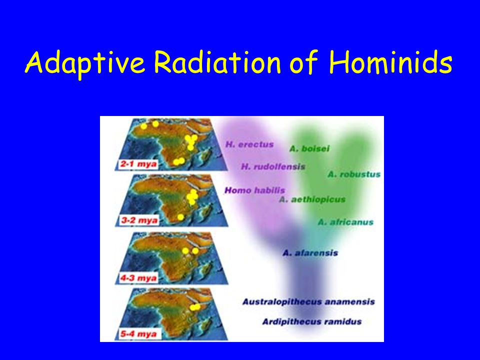 Adaptive Radiation of Hominids