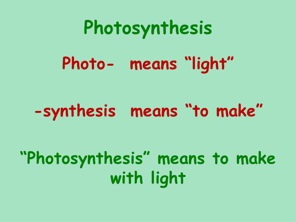 Photosynthesis Photo- means light -synthesis means to make Photosynthesis means to make with light