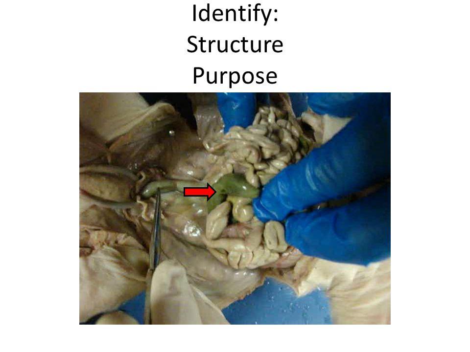 Identify: Structure Purpose