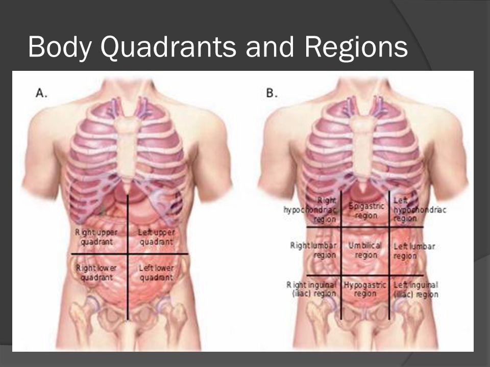 Body Quadrants and Regions