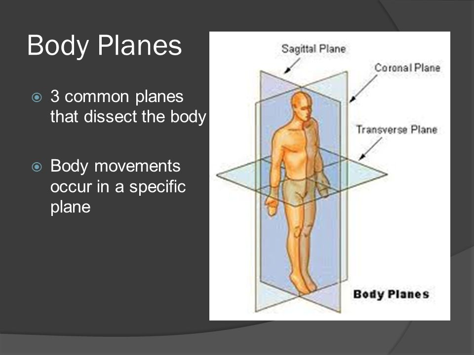 Body Planes 3 common planes that dissect the body