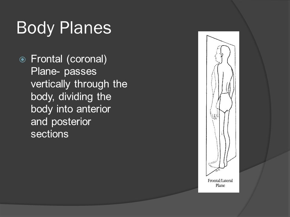 Body Planes Frontal (coronal) Plane- passes vertically through the body, dividing the body into anterior and posterior sections.