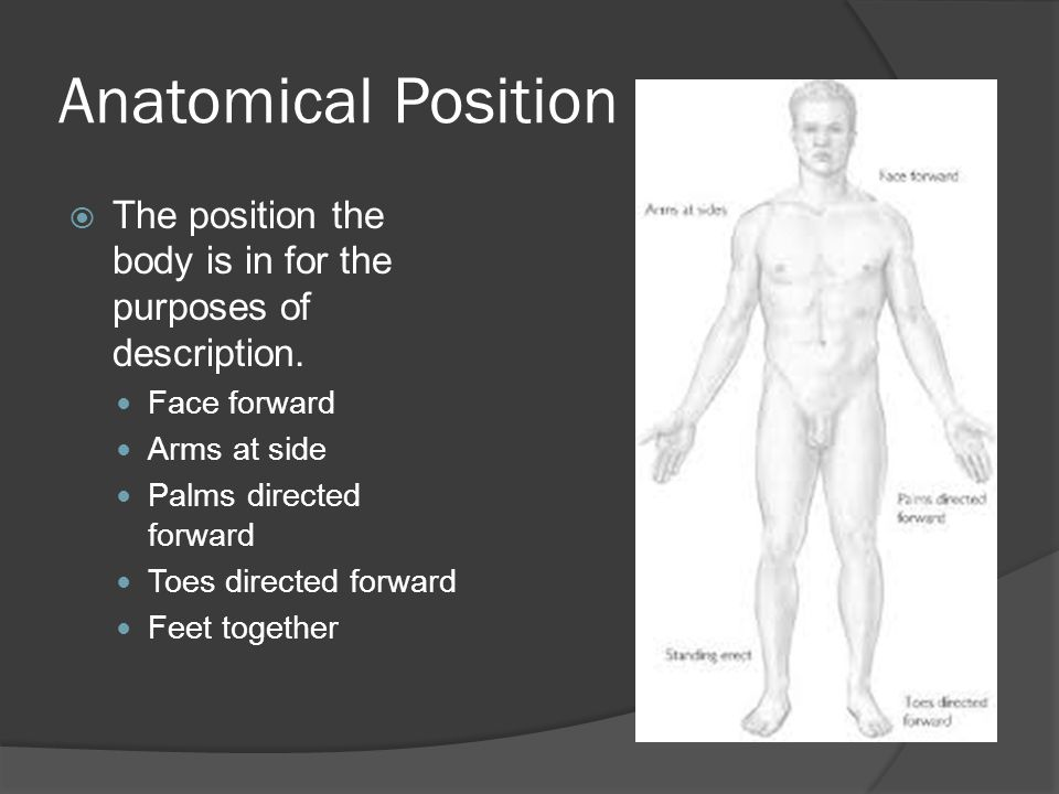 Anatomical Position The position the body is in for the purposes of description. Face forward. Arms at side.