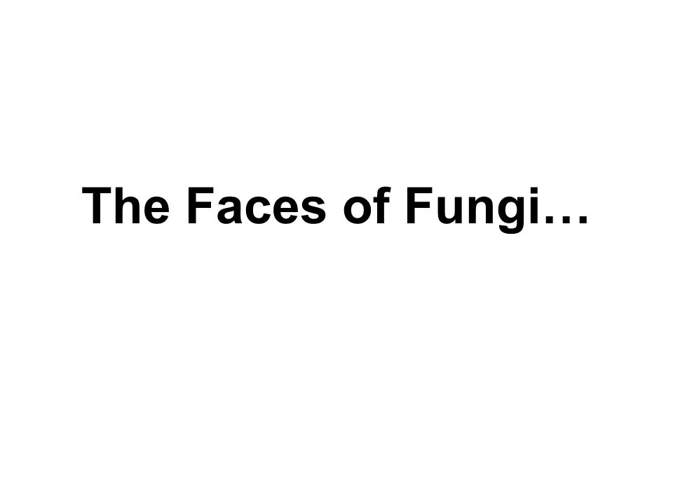 The Faces of Fungi…
