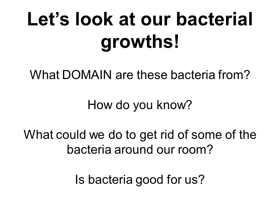 Let's look at our bacterial growths